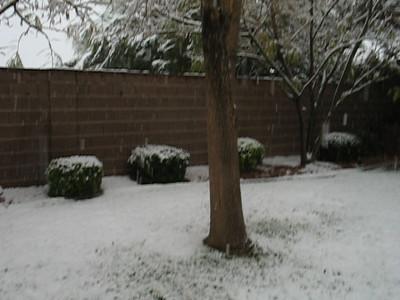 Video-heavier-snow-in-backyard-vegas  12-15-08