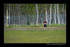 DS5_3396-12x18-06_2016-Softball-W