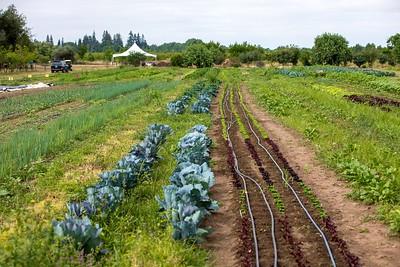 Farm-0512