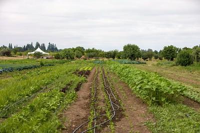 Farm-0513