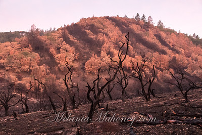 7:12am Sunrise reveals the burnt landscape near the Lovall Valley Loop