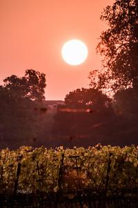 8:17am  Smokey sunrise over the vineyards on Sonoma Mountain.