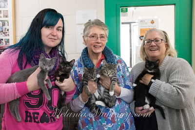 9:25am Felicia Green, Monna Throop, and Sara Rusmisel rangling kittens at Pet's Lifeline.