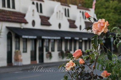 6:53am Mission roses and the Creamery/Burger & Vine.
