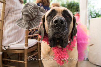 2018_04 27_PLL TailWags-211