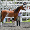 SCAHC-BuckleSeries-20130609- (151 of 774)