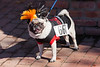 the 2012 Spooky Pooch Parade @ The Chicago Botanic Garden