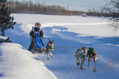 Sled Dog Derby 2014