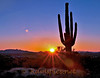 Saguaro cactus at sunset Ft. McDowell foothills in Scottsdale AZ.