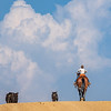 young boy on horse follows two cows over the hill clouds behind