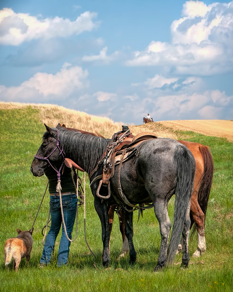 round up one horse on hill two horses and dog in grass