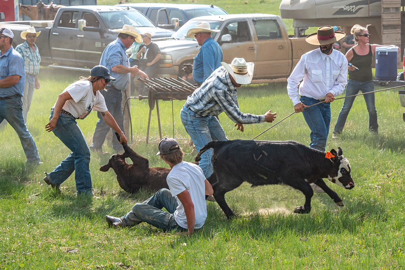 Calf gets up after branding girl holds onto another calf