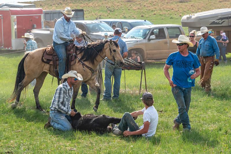cowboy plaid shirt and boy white shirt hold down calf