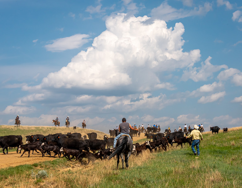 clouds over cowboys and cows