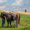 round up horses on hill horses and dog in grass