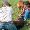roundup chances are cowgirl and black hat cowboy hold calf