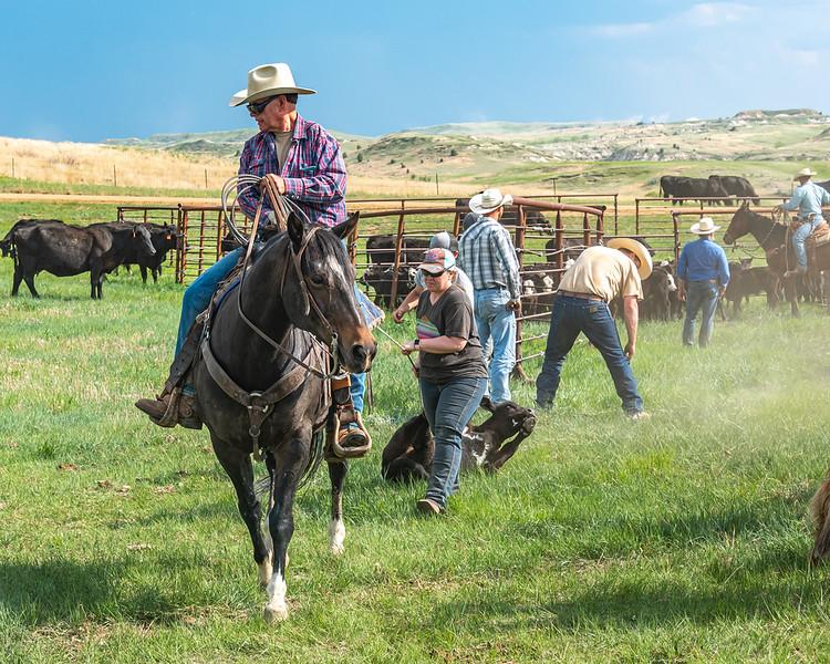 cowboy on horse plaid shirt brining out calf woman helping