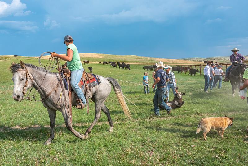 woman green shirt on horse bringing out calf