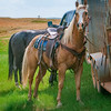 roundup horse tied up to horse trailer