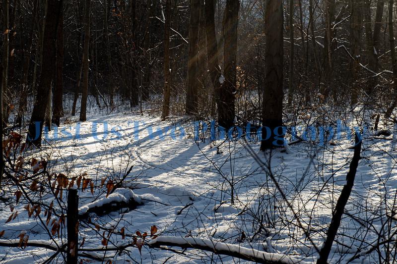 quail_hollow_trees_barath_2020_289