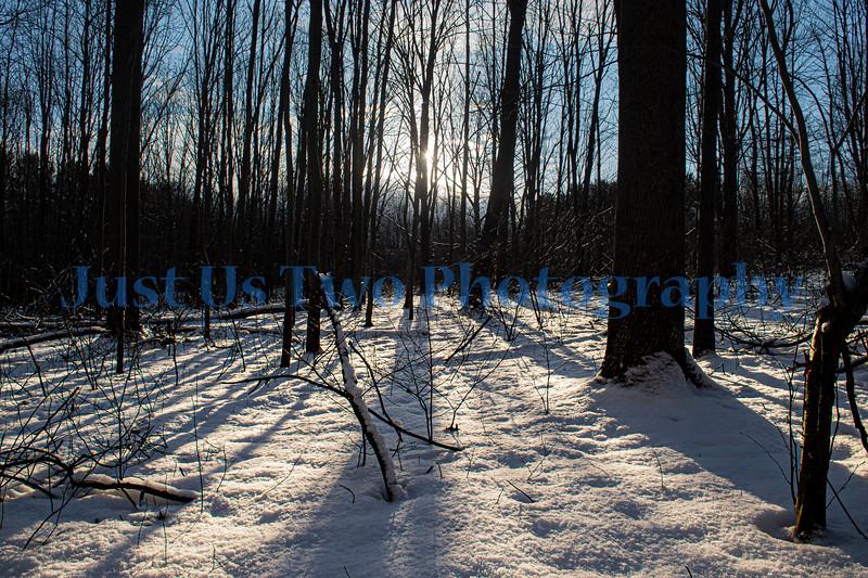 quail_hollow_trees_barath_2020_298
