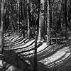 quail_hollow_trees_barath_2020_301