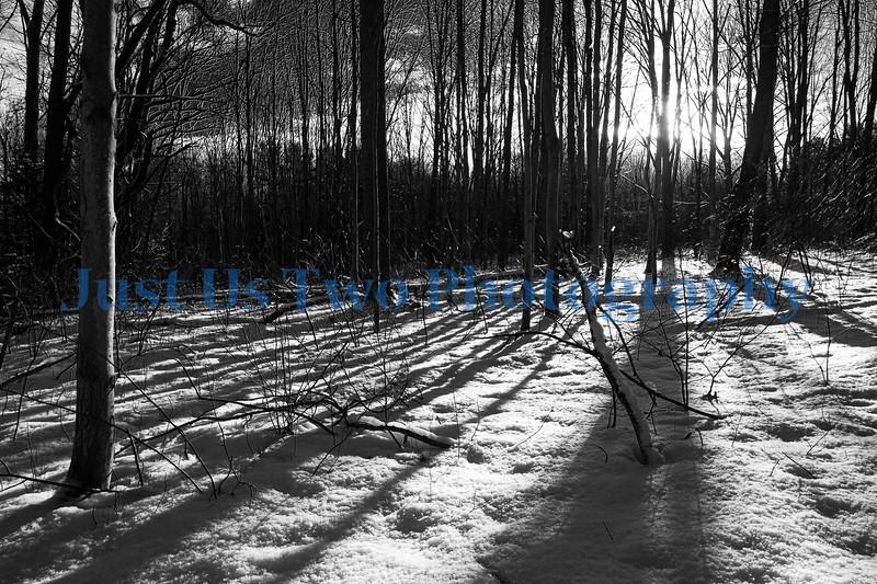 quail_hollow_trees_barath_2020_299