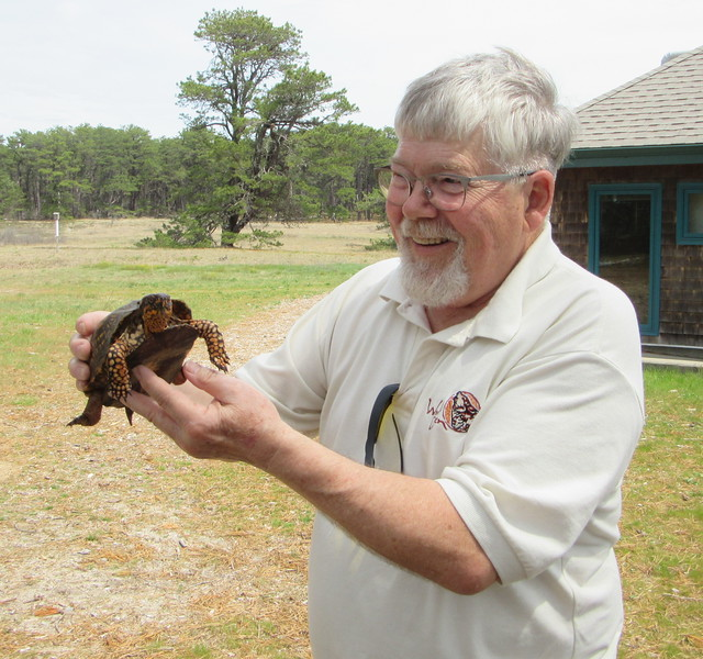 This box turtle wanders into the picnic area at Wellfleet -- just in time for the barbecue.