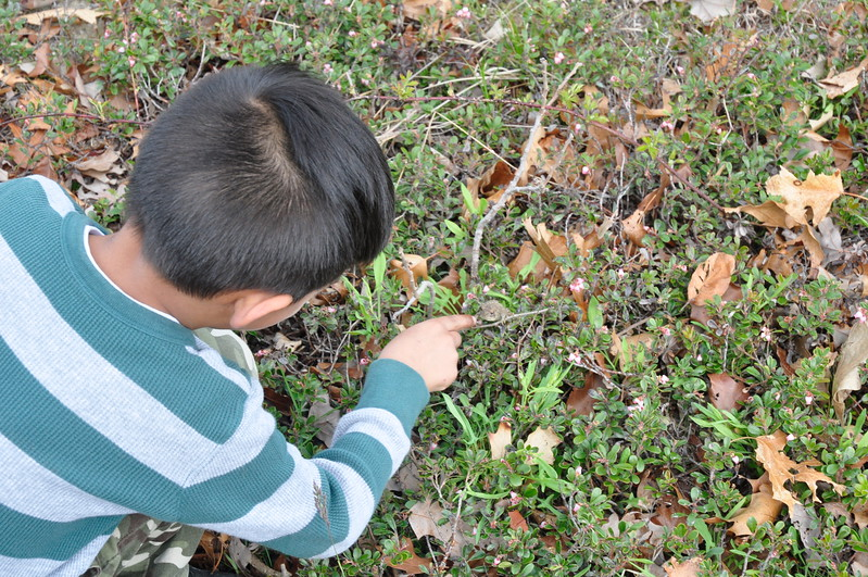 Some wildlife encounters require luck and a keen eye -- like this toad in the bearberry.