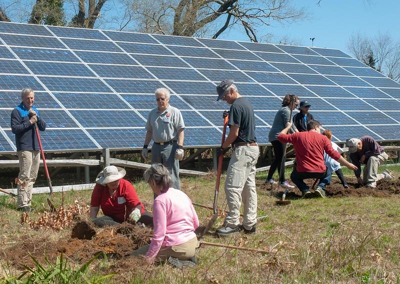 "At Wellfleet Bay, volunteers create 4 new ""turtle gardens"" to attract nesting turtles."