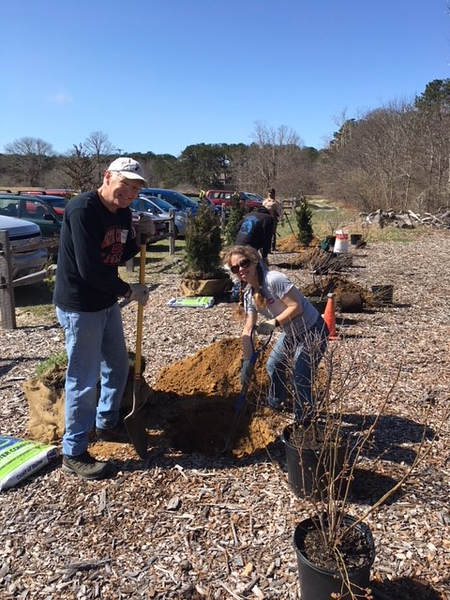 Volunteers plant over 80 trees at Boston Nature Center, Habitat, and Felix Neck.