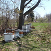 On April 27, 2013, Mass Audubon wildlife sanctuaries turned from tranquil to a beehive of activity . . .