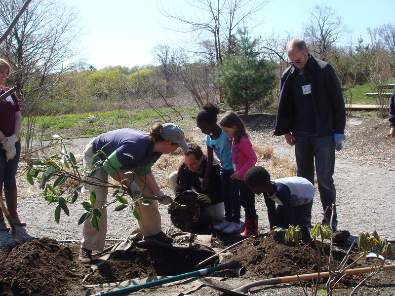 They planted 6 trees, including flowering magnolias to attract wildlife,