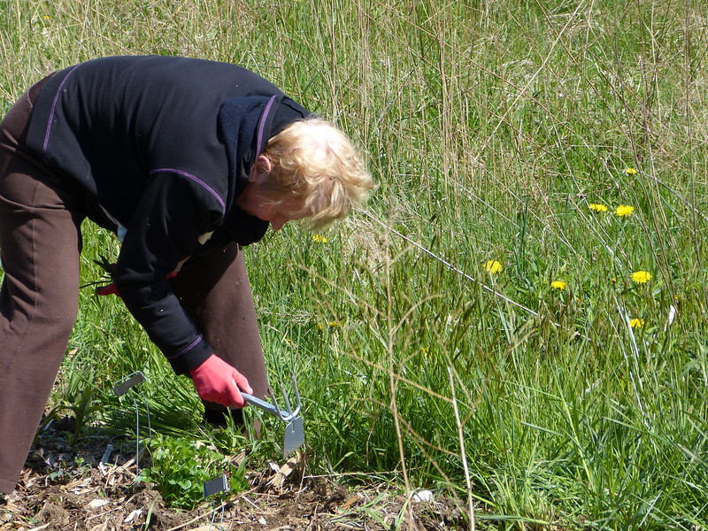 We spruced up some 34 gardens, which involved weeding (and probably a few sore backs),