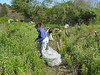and filled over 170 giant trash bags with this invasive weed!