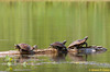 While we worked, we saw turtles sunning on a log,