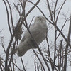 while a Snowy Owl supervised the entire beach cleanup project at Joppa Flats, from start to finish.
