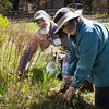 Some volunteers head for the gardens, cleaning out beds to make room for new growth.  (c) Phil Doyle