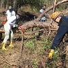 At Cedar Pond, volunteers dismember a fallen tree -- very carefully!