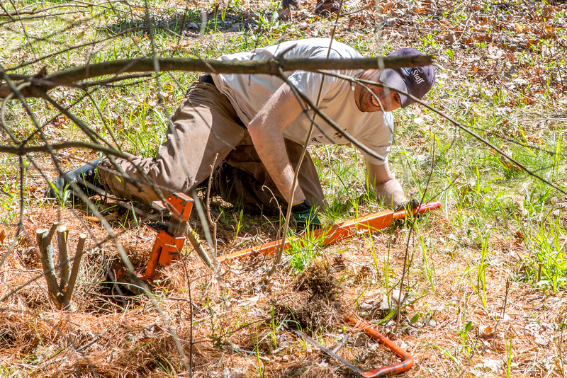A weed wrench helps to remove tenacious invasive vegetation at Laughing Brook. <br /> (c)  Francois Gossieaux