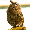 The screech owl isn't the only special guest . . .<br /> (c) Sandra Robb