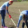 Others head to the farm at Moose Hill, to weed the newly sprouted crops.