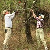 A good pair of loppers, good teamwork, and a hearty tug bring down Oriental bittersweet vines