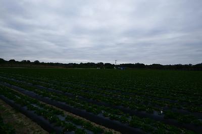 Strawberry Passion Farms