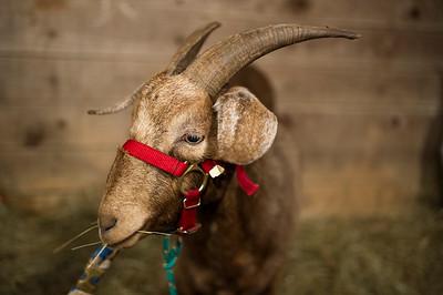 Steadfast Farms Nativity 2014