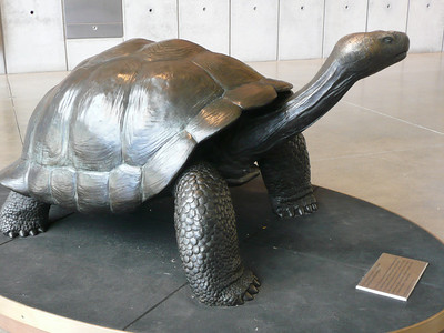 A cool bronze sculpture of a Galapagos tortise