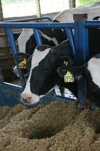100605 Breakfast on the Farm Mill Creek Dairy 033
