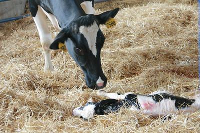 100605 Breakfast on the Farm Mill Creek Dairy 041