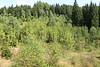 In Erlabrunn - Am 25.07.2014