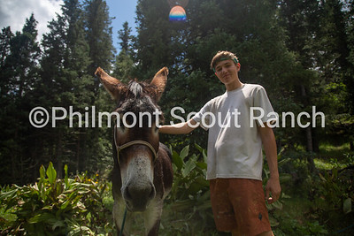 A scout pets a burro at Black Mountain camp on Sunday, August 11, 2019 at Philmont Scout Ranch in Cimarron, New Mexico.